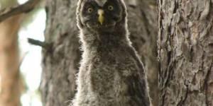 Мониторинг местообитаний редких видов пернатых хищников в Алтайском крае