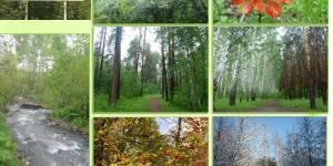 Возрождение Дендрологического парка г. Новосибирска