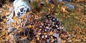 После сигнала ОНФ в Зуевском районе Кировской области ликвидированы свалки ветеринарных отходов