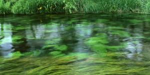 Чистый берег - чистая вода