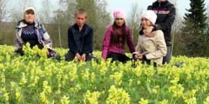 Вестники весны – первые цветы