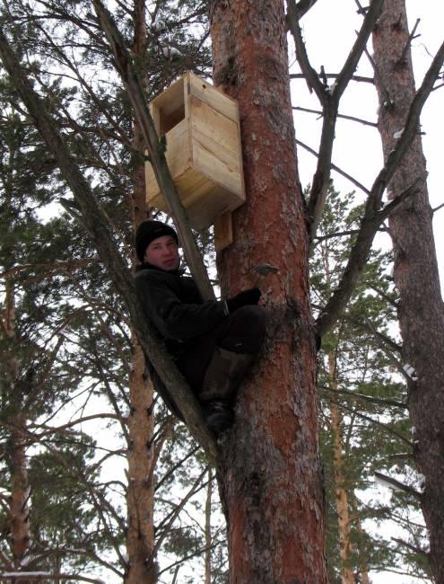 """На Алтае помогают совам в решении """"жилищной"""" проблемы"""