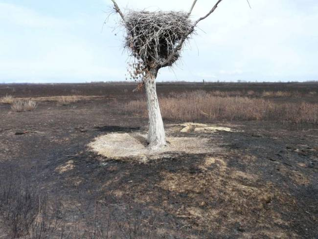 У аистиных гнезд в Амурской области появились свои хранители