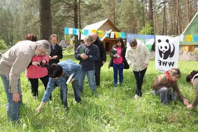 Более 60-ти видов растений обнаружили журналисты на территории Горно-Алтайского