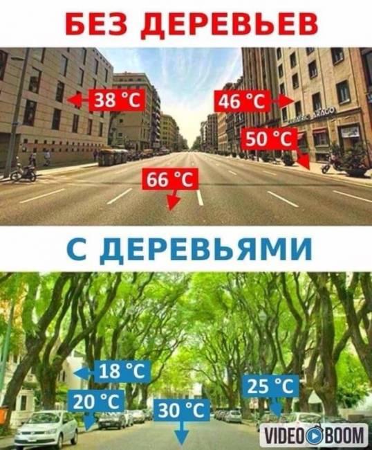 Без деревьев и с деревьями
