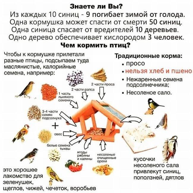 Нельзя давать птицам пшено и хлеб!