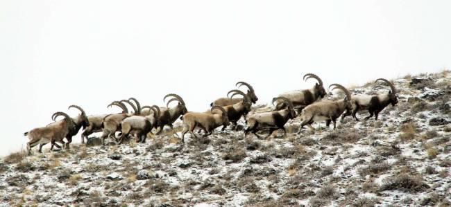 Международный фотоконкурс «Живая природа Алтая»