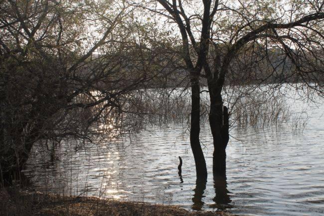 Природа Сикачи Аляна
