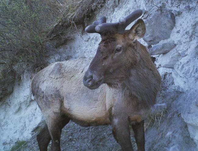 Фотокадры обитателей Алтайского биосферного заповедника