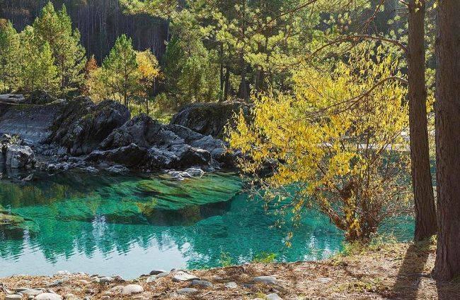 Приём фоторабот на конкурс «Живая природа Алтая»  продлён до 20 сентября