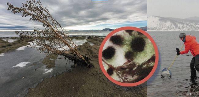 Медленное, но неуклонное загрязнение «священного Байкала»: ученые бьют тревогу