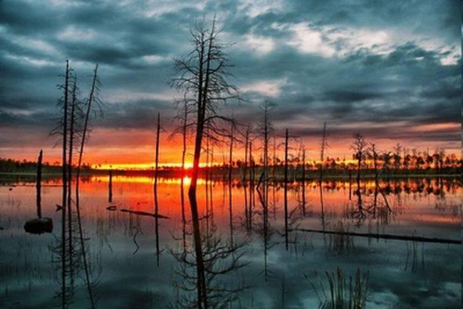 Васюганское болото — главный холодильник земли