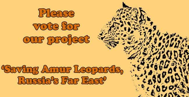 Проголосуй за сохранение дальневосточного леопарда!