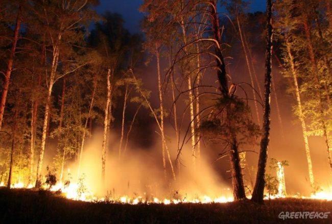 Россия на первом месте в мире по уничтожению лесов
