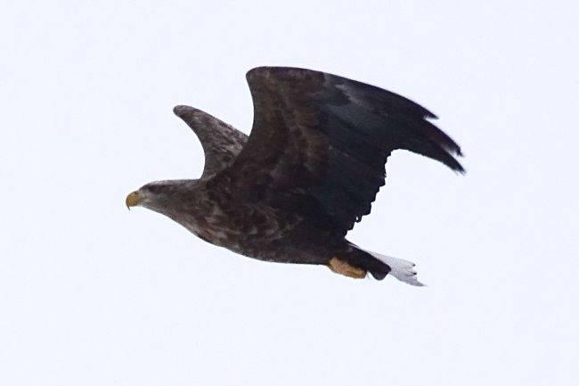 Орлан-белохвост и другие обитатели Cростинского бора