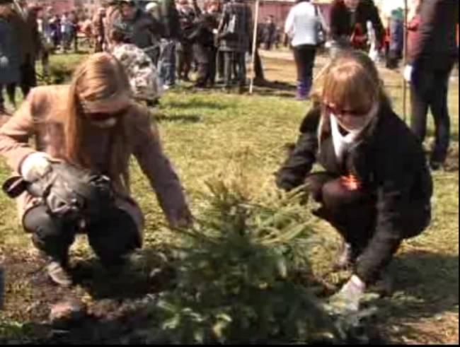 сюжет о посадке деревьев в год леса