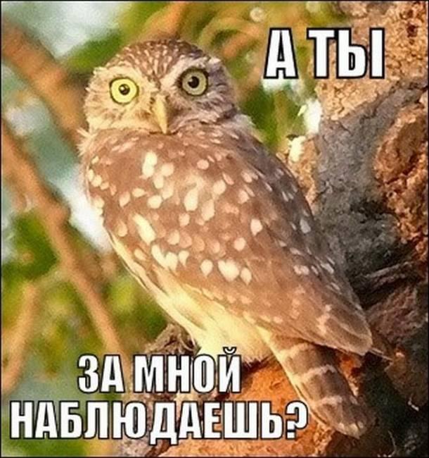 Соревнование бердвочеров Сибири и  наблюдателей пернатых хищников Евразии