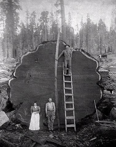 Когда деревья были большими...