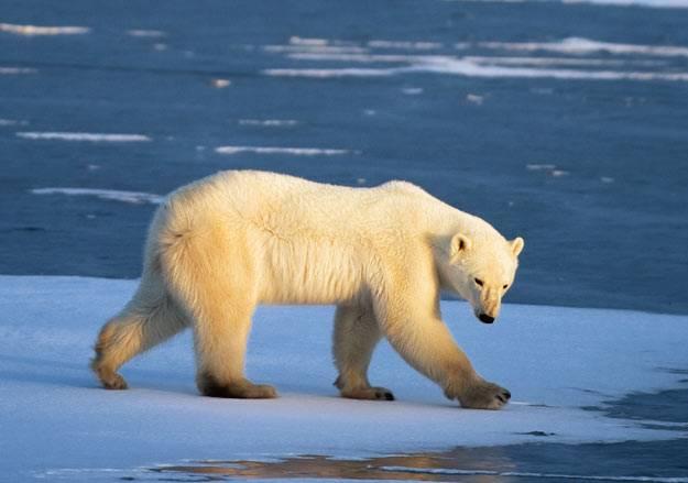 Стоит ли России спешить с освоением арктического шельфа