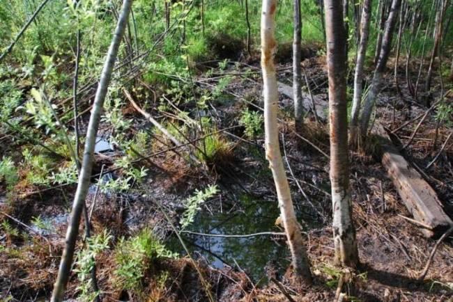 Разлив нефтепродуктов в Смирныховском районе до сих пор не ликвидирован