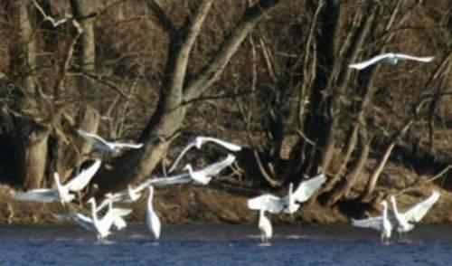 Трансграничное сотрудничество   в бассейне реки Днестр