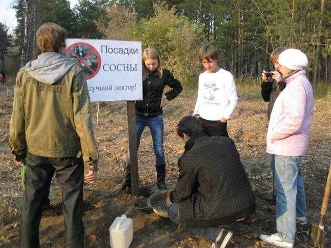 Берёзовую рощу в Красноярске отдают на растерзание
