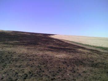 Лето в Аймаке Дорнод: пожары, дзерены и нефть
