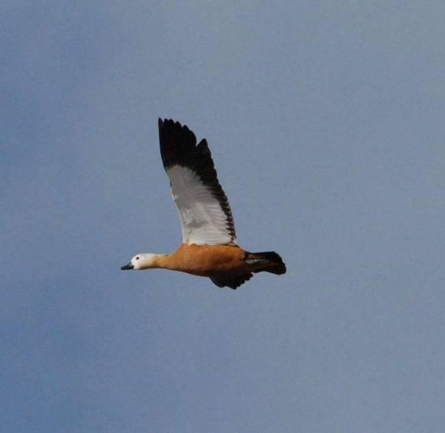 Мониторинг миграций птиц проходит в заказниках Алтайского края