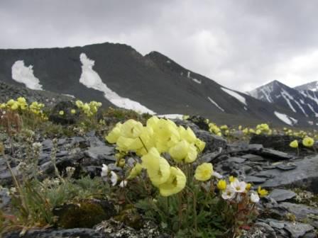 экспедиция к подножию Белухи и самым большим ледникам Алтая