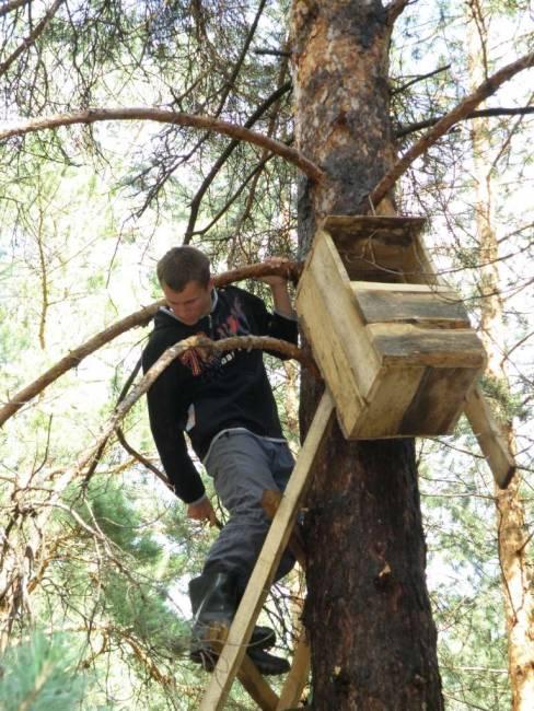 Проект «Поможем совам» подходит к завершению