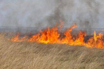 Общественники тушат пожары
