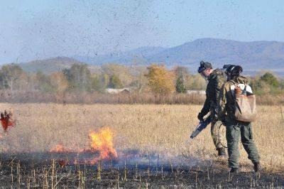 Несмотря на запрет выжигания стерни и сухой растительности прдолжается