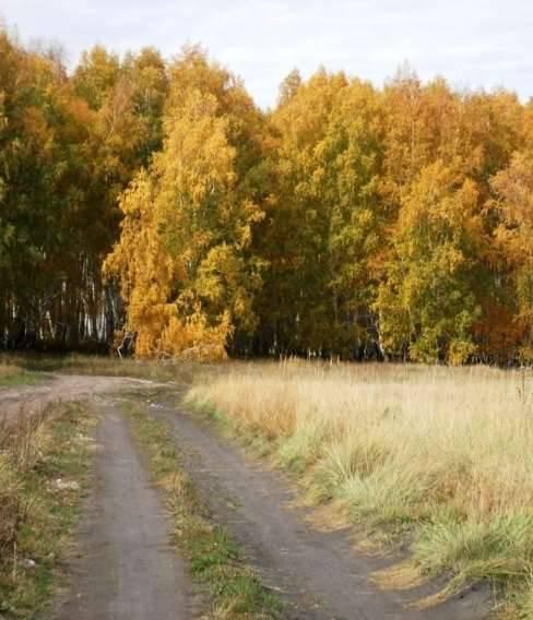 Вслед за алтайской дорогой. Фото: Кондратьева София