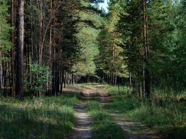 Состояние и использование лесов. Мнение жителей Алтайского края.