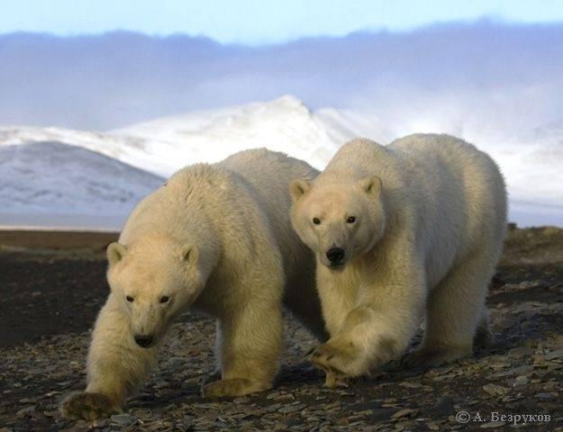 Десант в медвежий угол