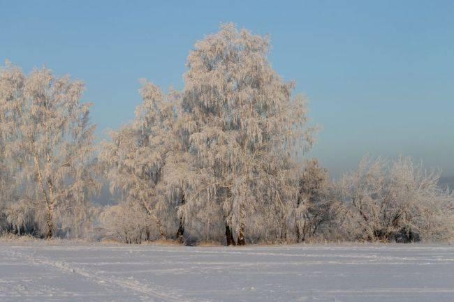 КОНКУРС ЭКОЛОГИЧЕСКИХ ПРОЕКТОВ (зима 2014)