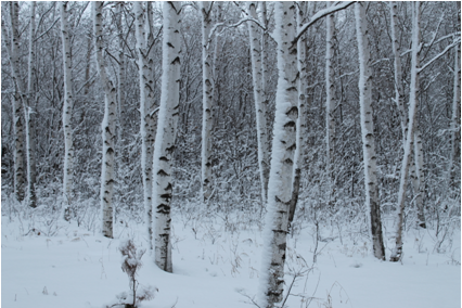 Степной лес