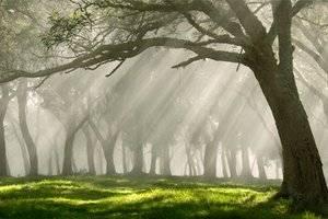 Дикая природа приносит экономике страны миллиарды долларов Британии Фото: AP