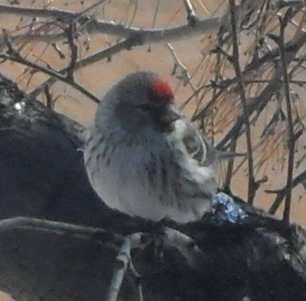 Помоги зимующим птицам!