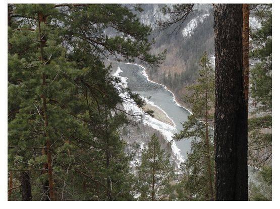 Влияние вырубок леса на состояние таежной реки Чикой