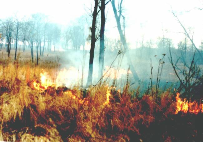 Первые пожары на Земле Леопарда