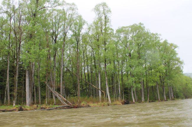 Управление лесными ресурсами