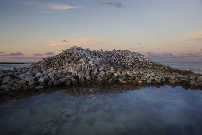 Анна де Карбуччиа. Моллюски борются с размыванием островов. 2014