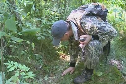 Специалисты прошли по следам выпущенных амурских тигров