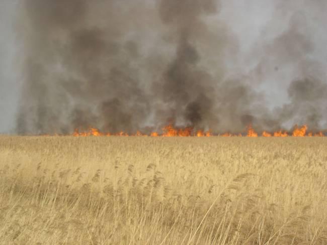 Огонь на Приханкайской низменности. Фото: С. Черняг