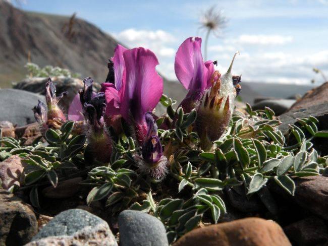 На территории национального парка «Сайлюгемский» проводится инвентаризация флоры