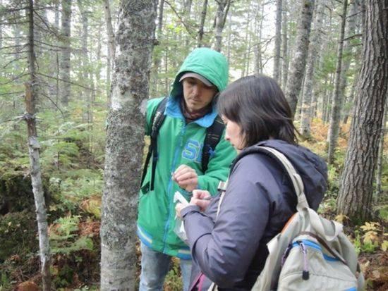 Лишайники помогут оценить влияние на окружающую среду завода СПГ