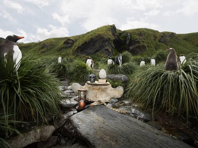 Анна де Карбуччиа. Субантарктические пингвины и яйцо бескрылой гагарки. 2014