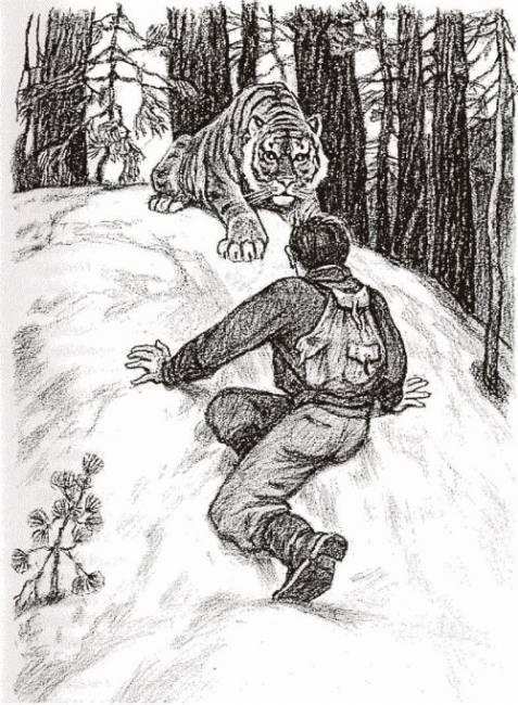 Один на один с тигром