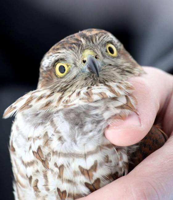 Центр реабилитации хищных птиц